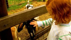 Collingwood Childrens Farm