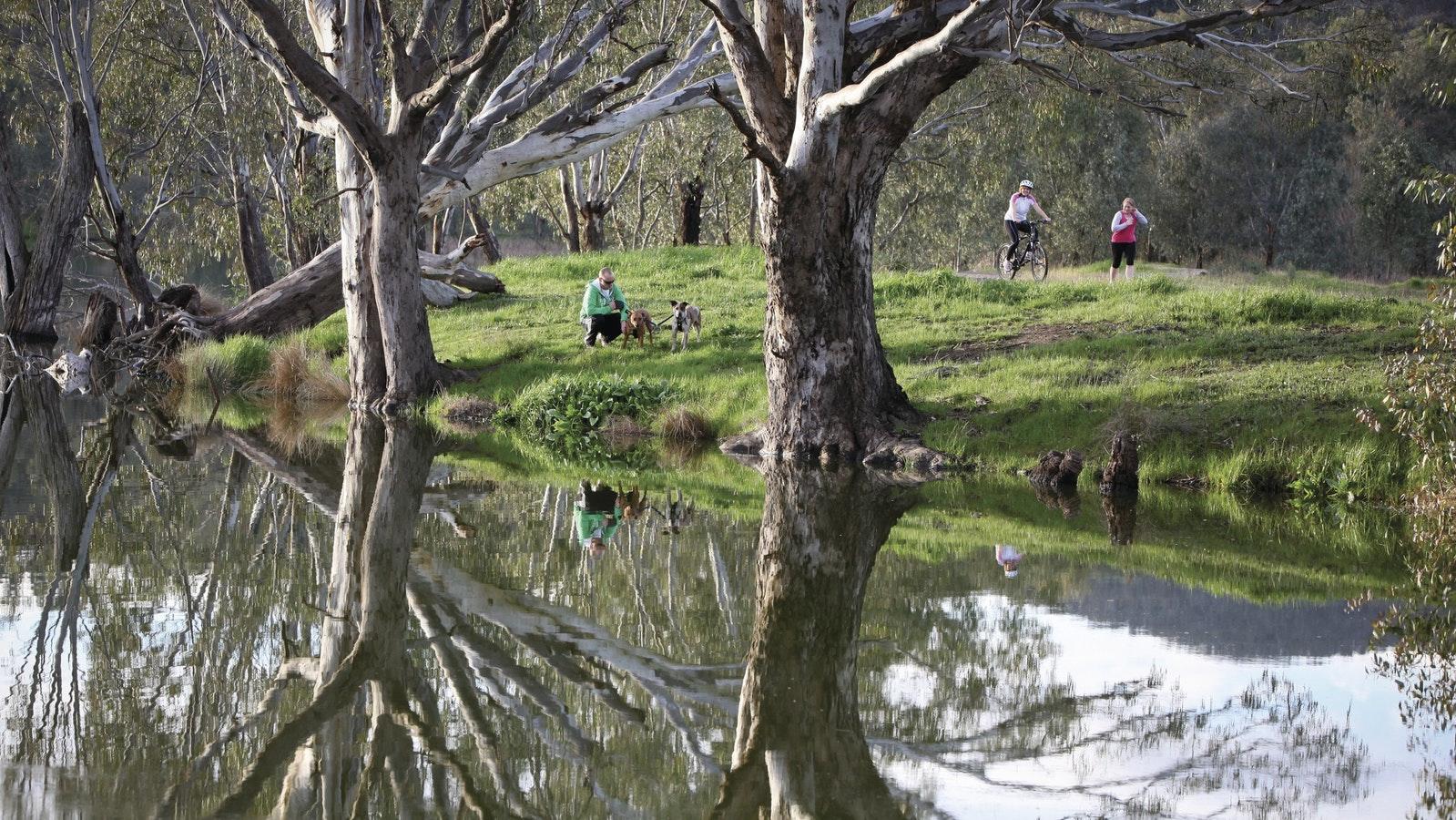 Wagirra Trail