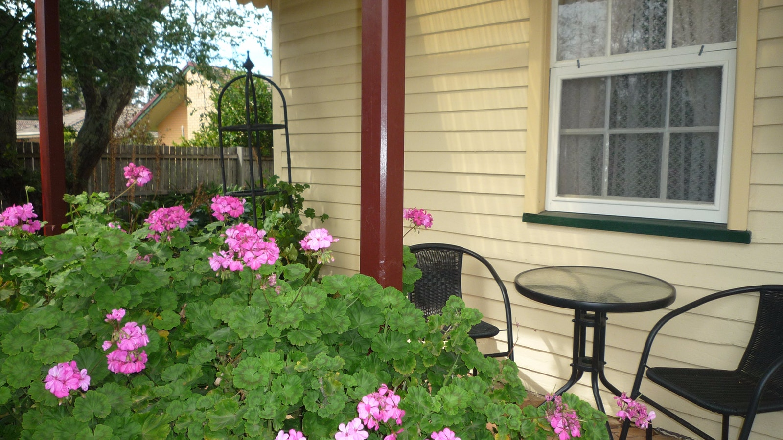 Geraniums and coffee