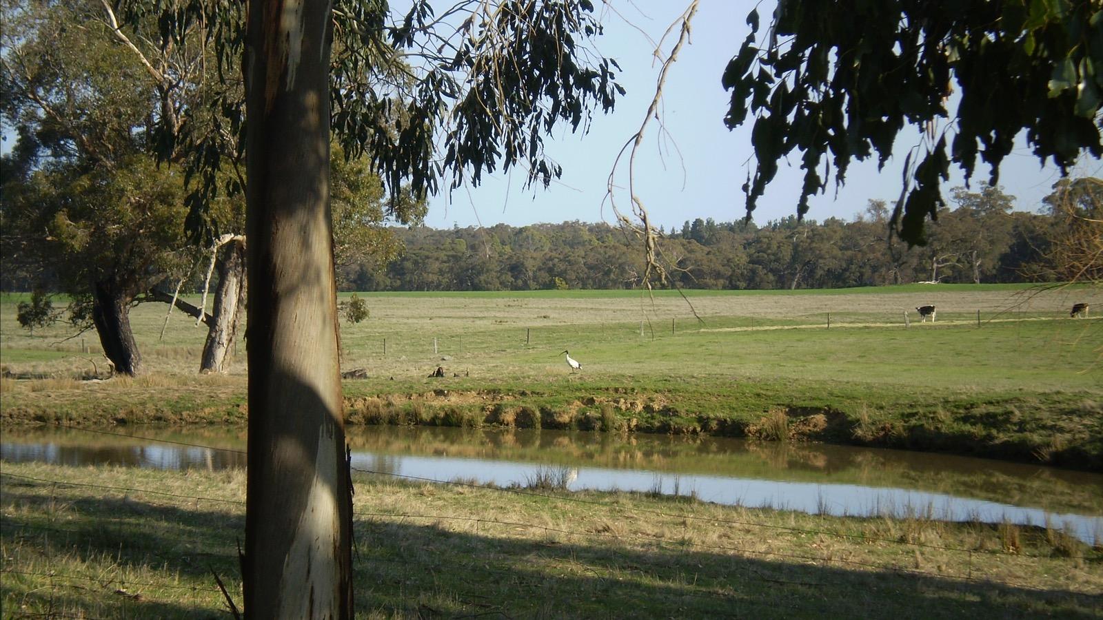 Farm landscape looking South