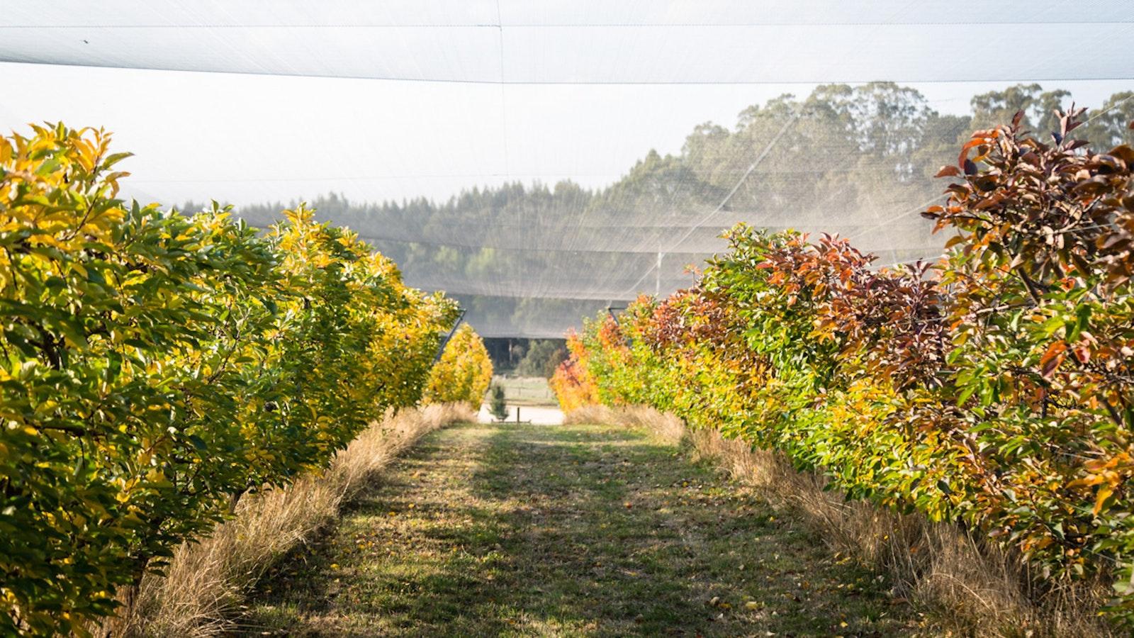 Daylesford Cider Orchard