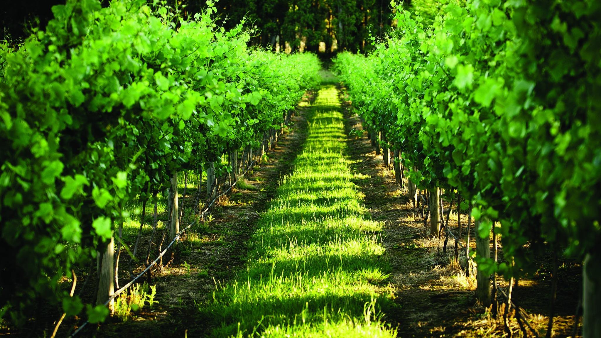 Fontanella Wines