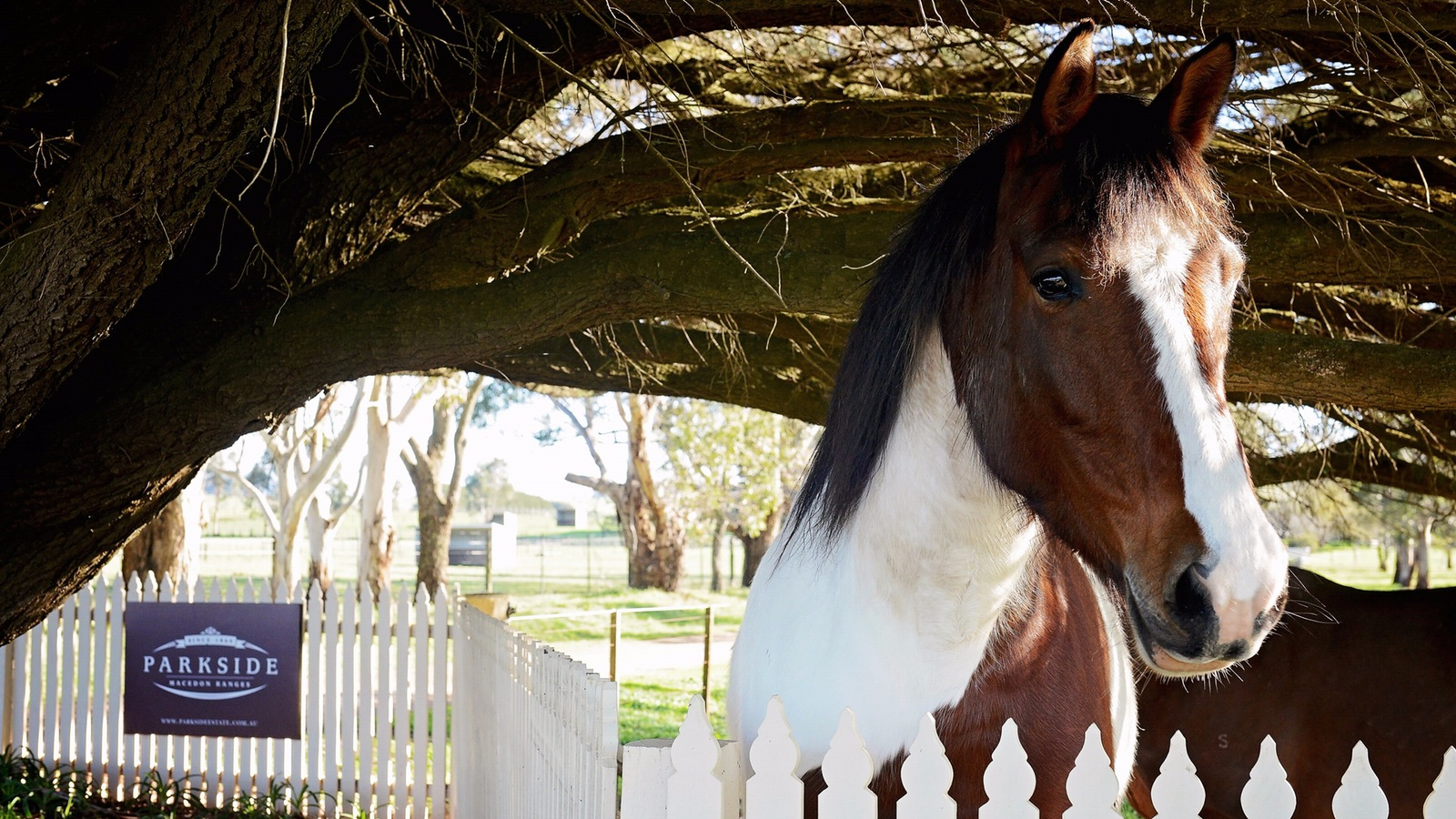 Meet Miss Poppy a member of the Parkside horse family who you can introduce yourself to