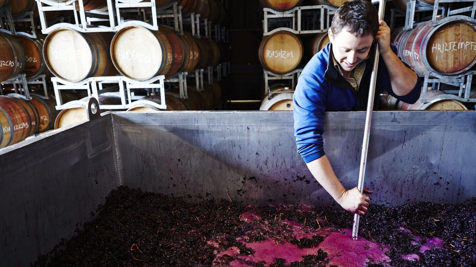 Chief Winemaker Robert Ellis