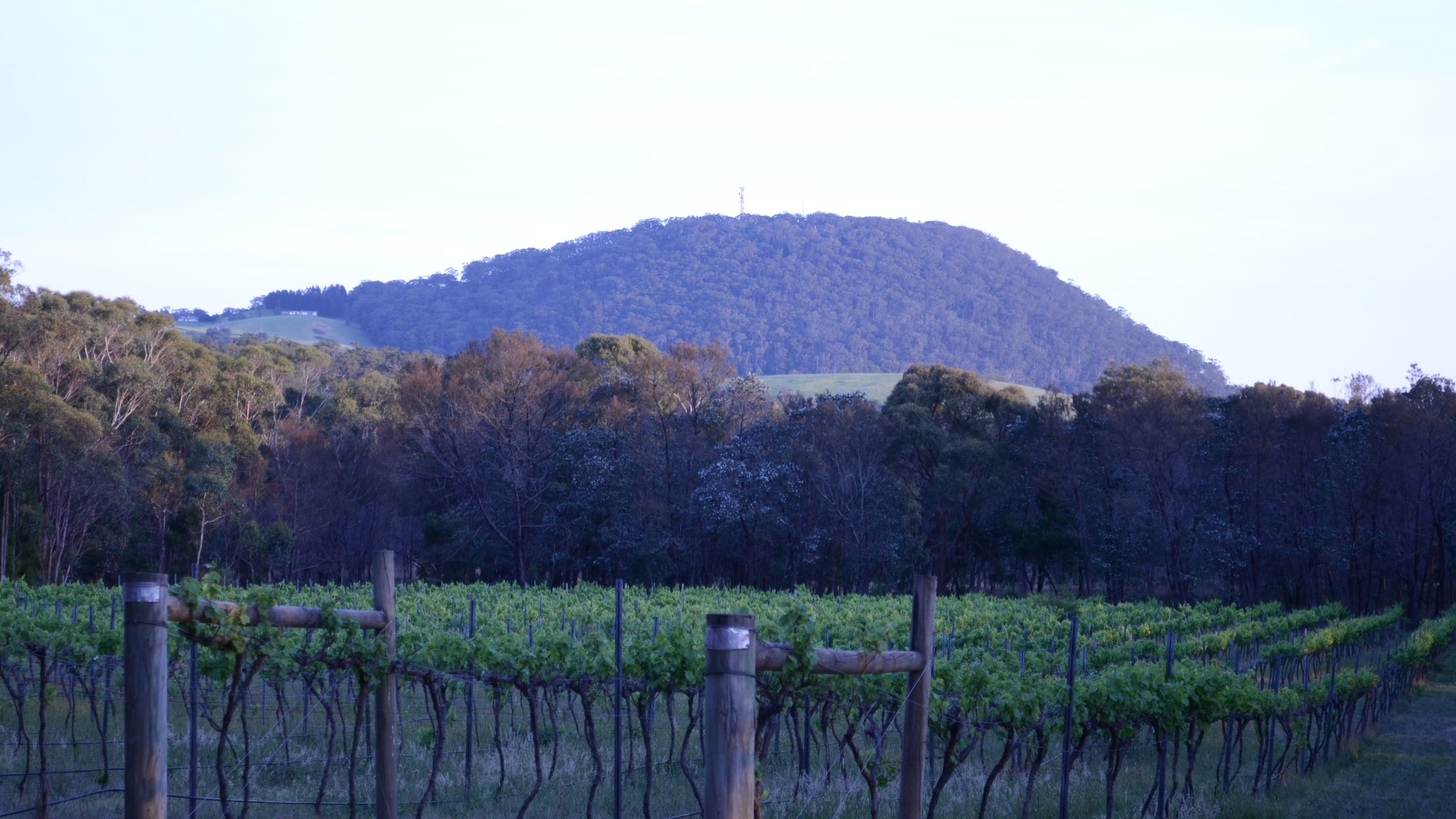 Mount Buninyong Winery