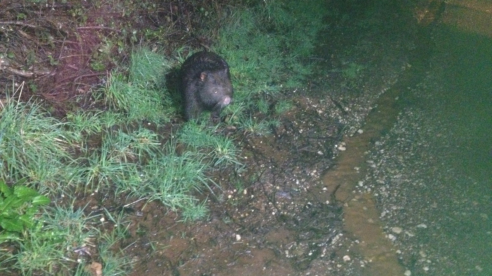 wombat discovery tour