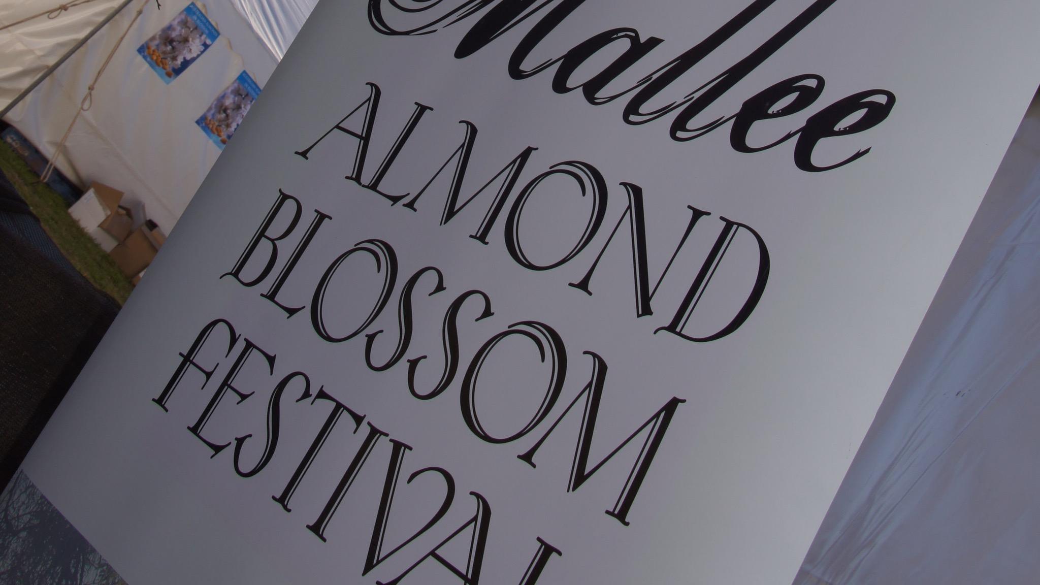 Mallee Almond Blossom