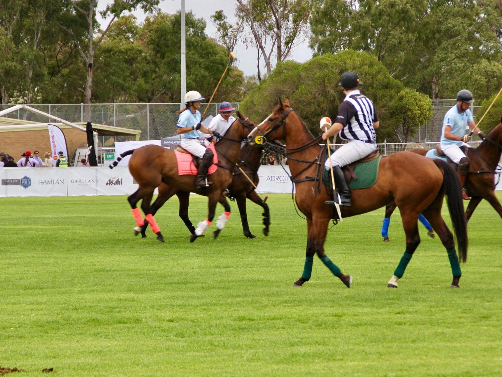 Horse polo match