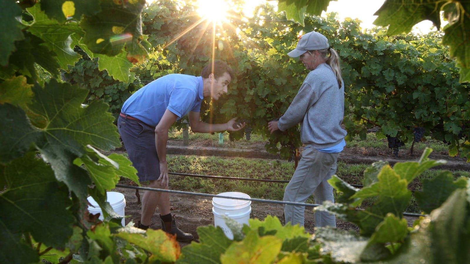 Oakdene Vineyards