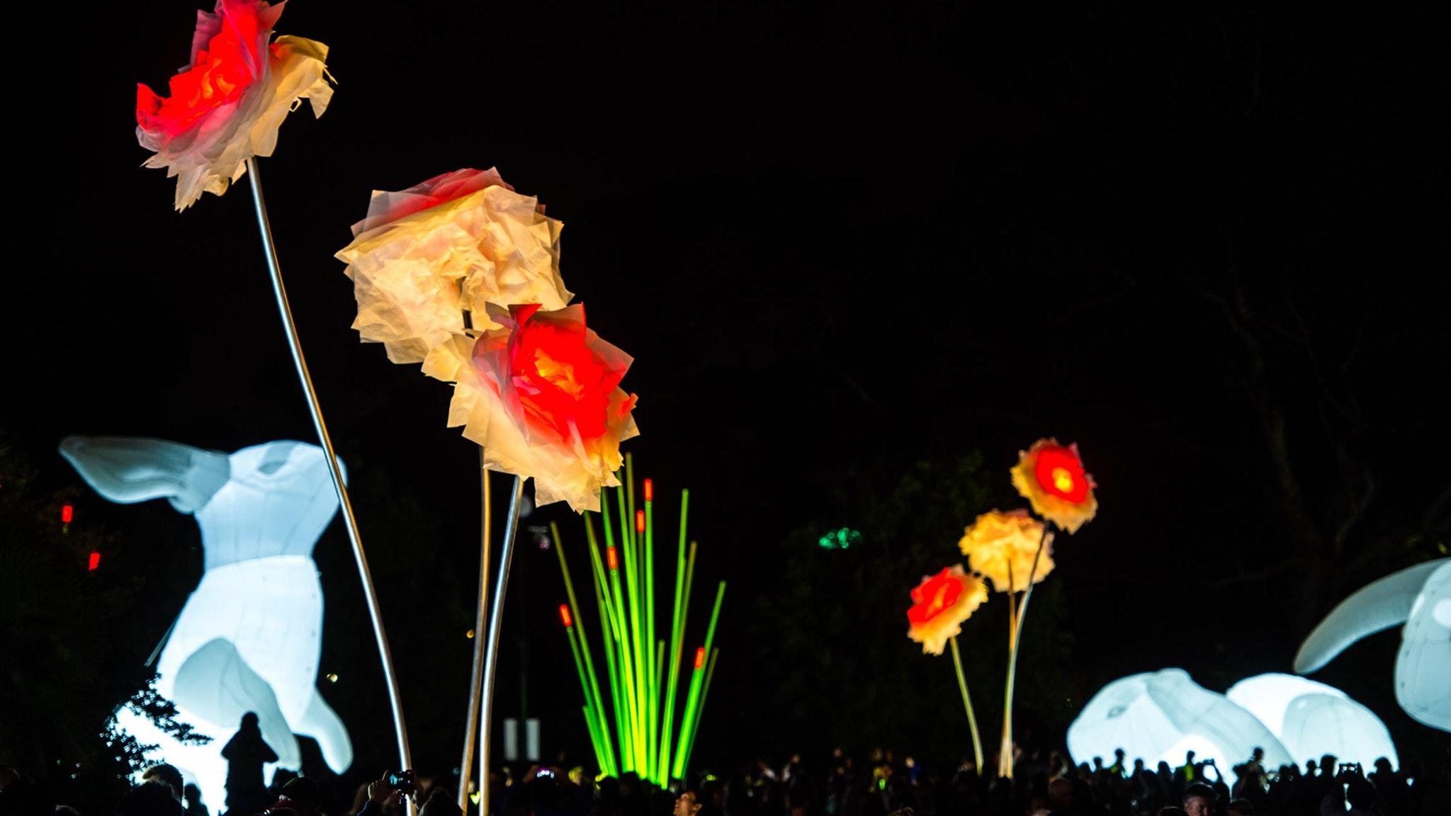 White Night Geelong