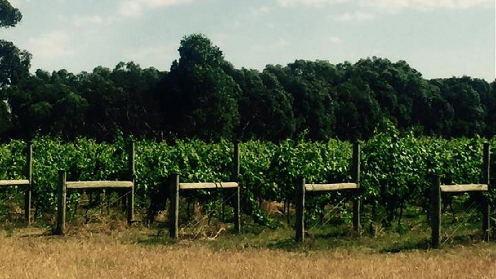 Banks Road Vineyards