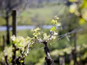 Generic Image - Food and Wine