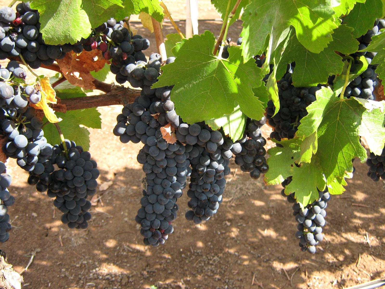 Waybourne Winery