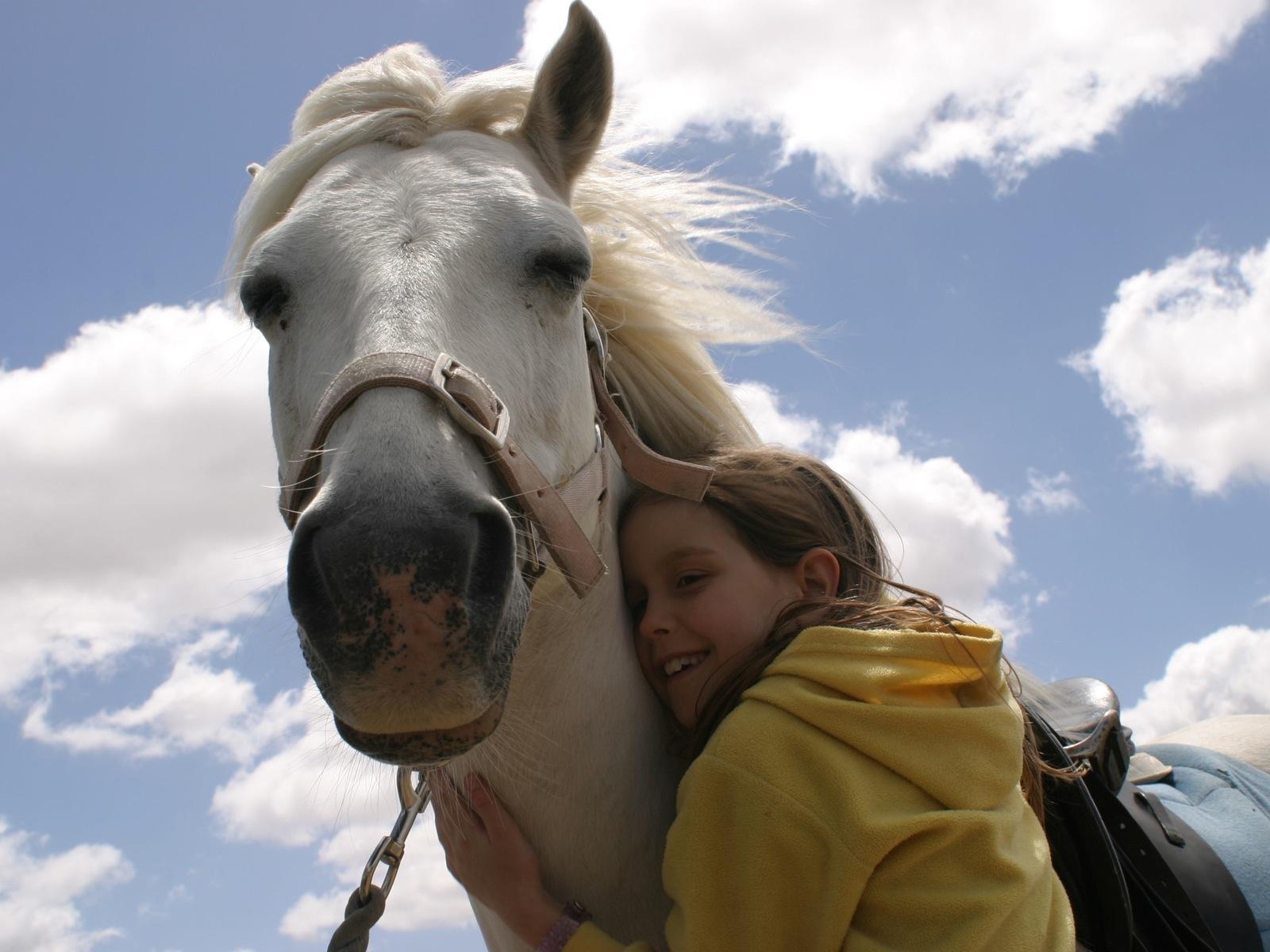 Saddle On Riding School