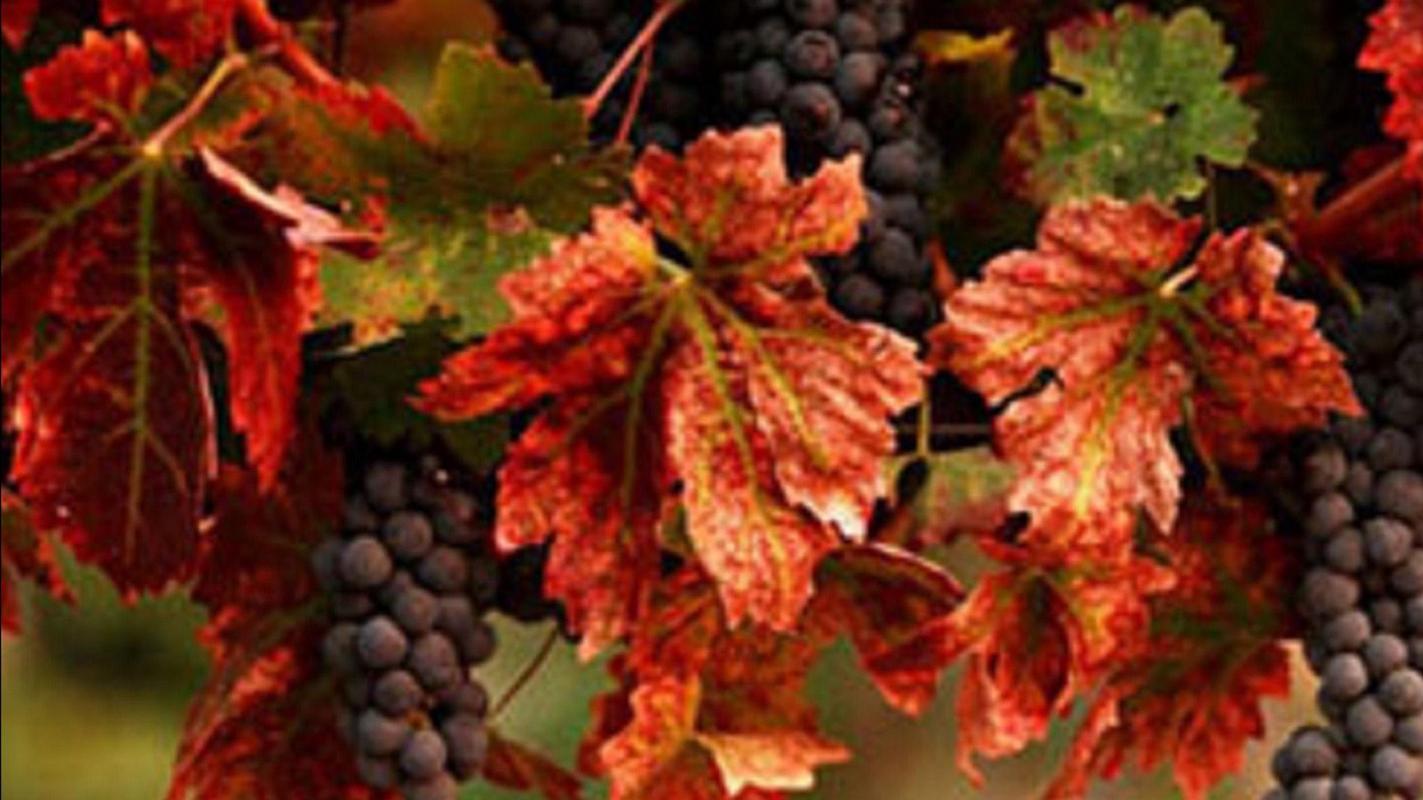 Moorabool Valley Winery Tours