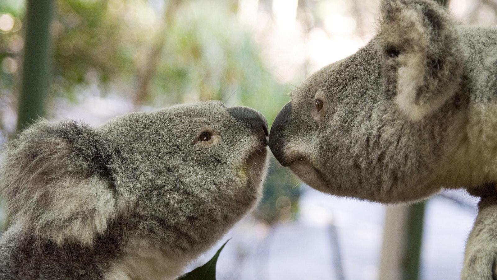 Jirrahlinga Koala and Wildlife Sanctuary