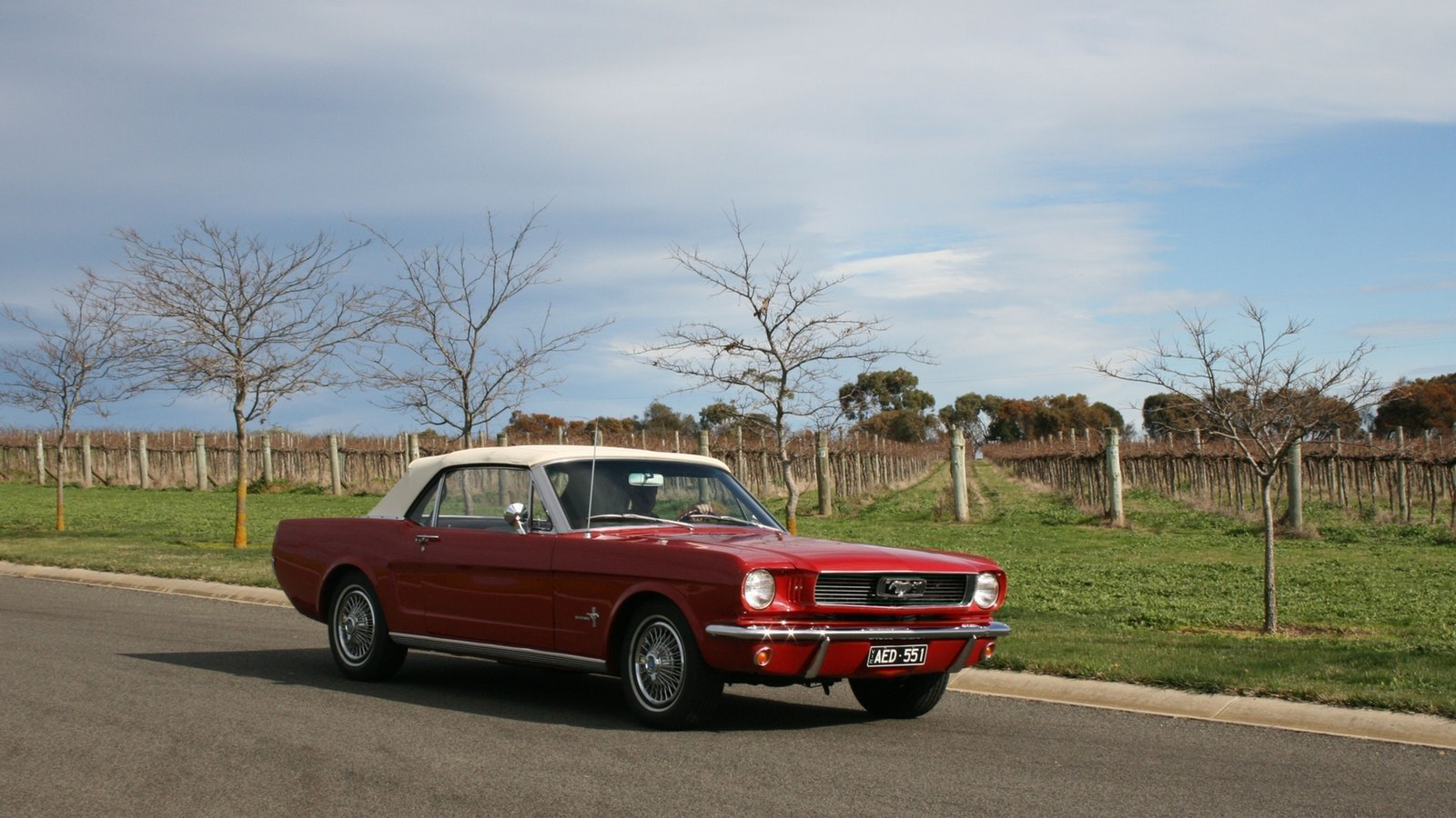 Mustang & Co. Winery Tour