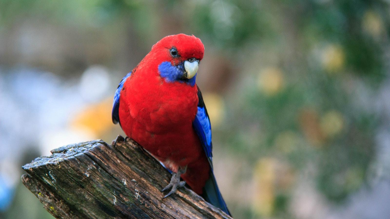 Experience abundant native birdlife
