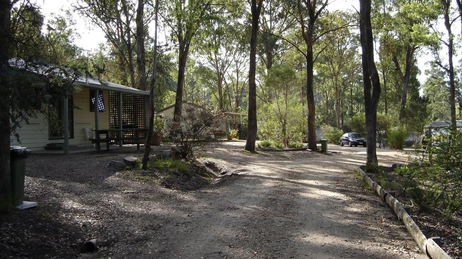 Park bushland setting
