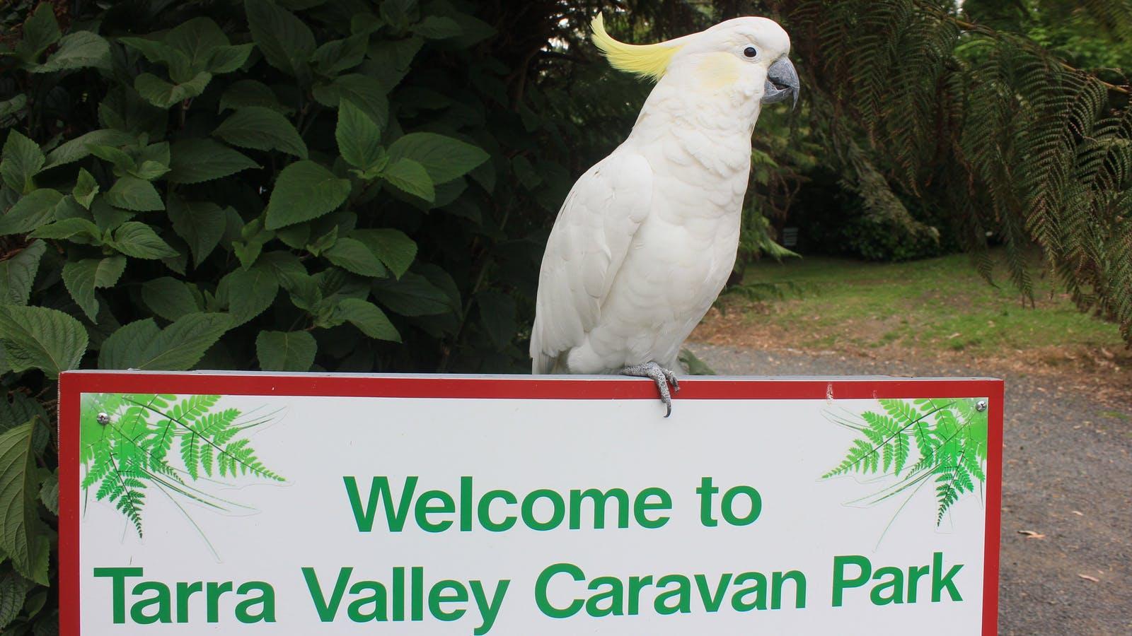 JO JO Tarra Valley Caravan Park Fernholme