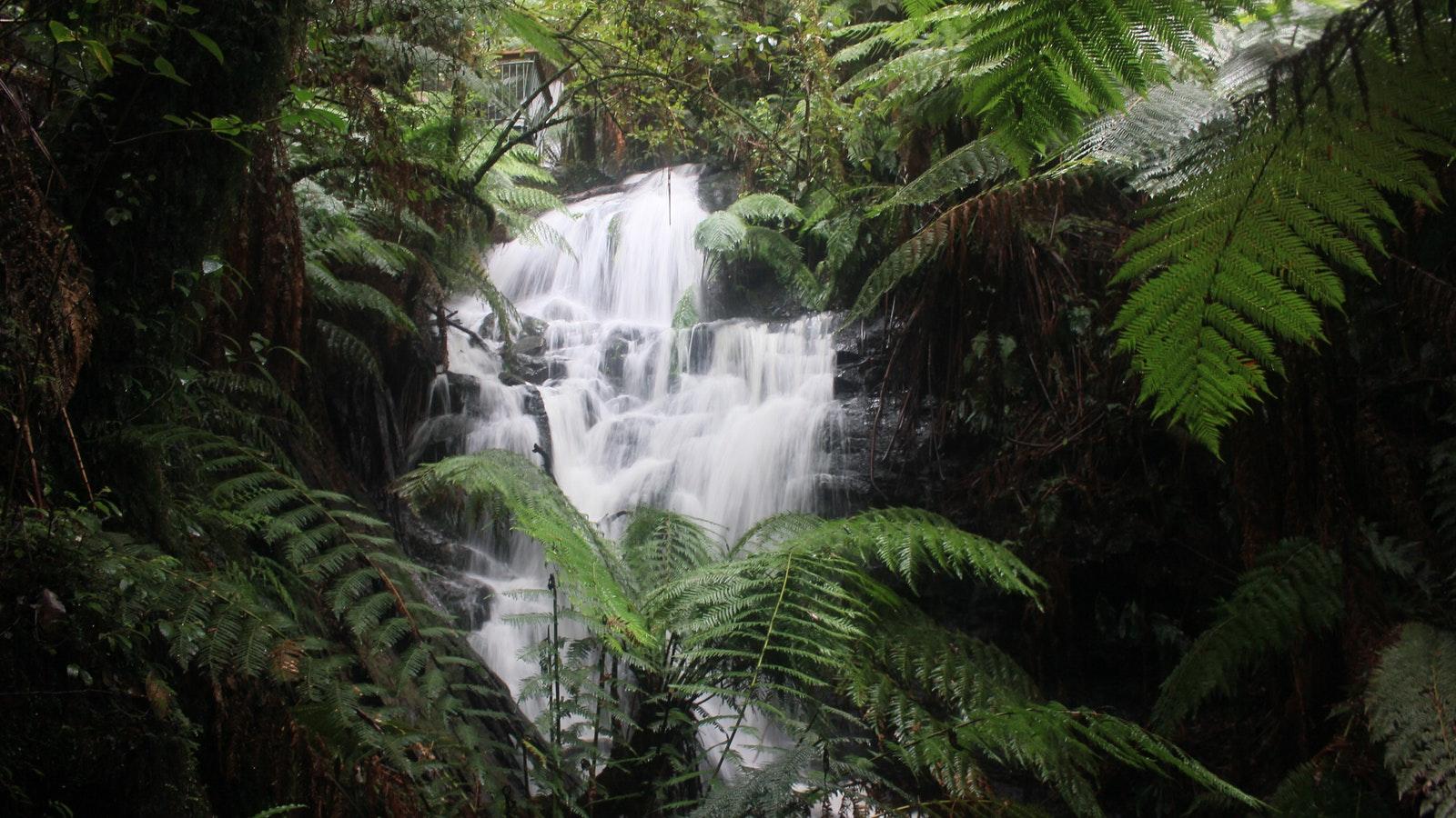 Cyathia Falls Tarra Valley