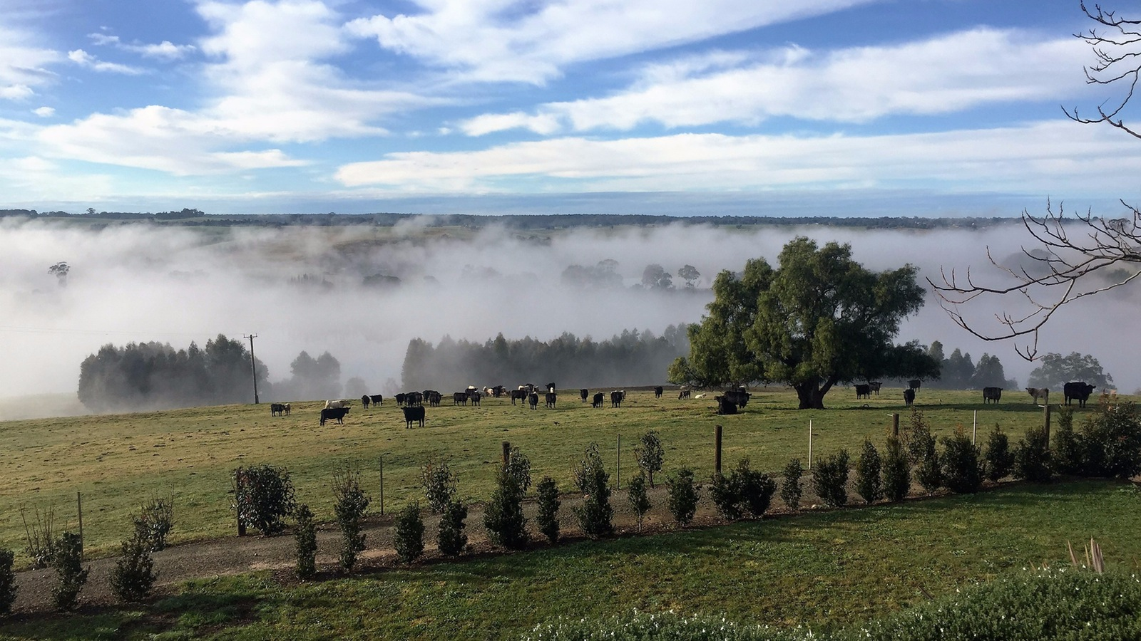Mist clearing over the paddocks