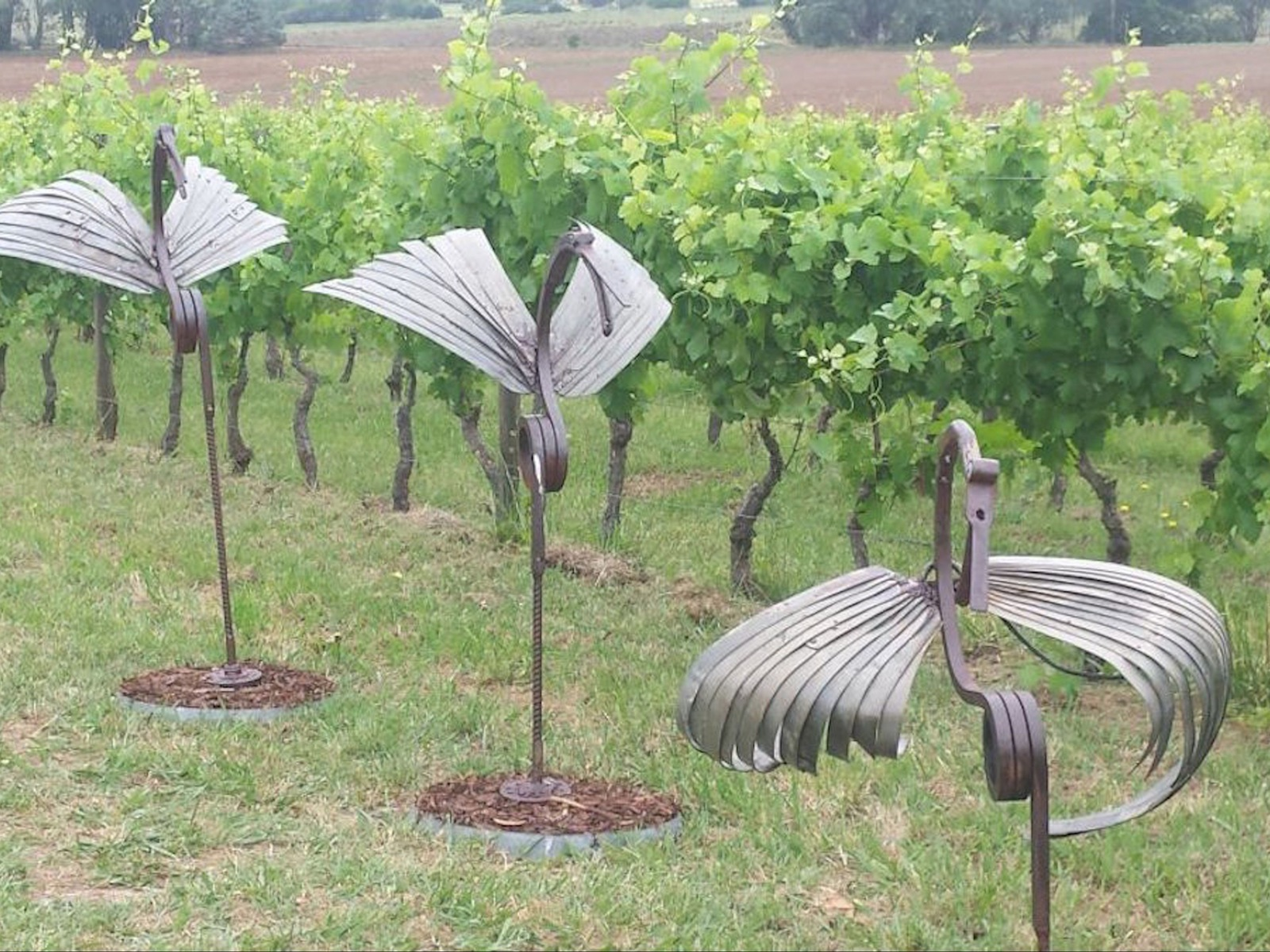 Sculptures in the vineyard, at Lucinda Estate