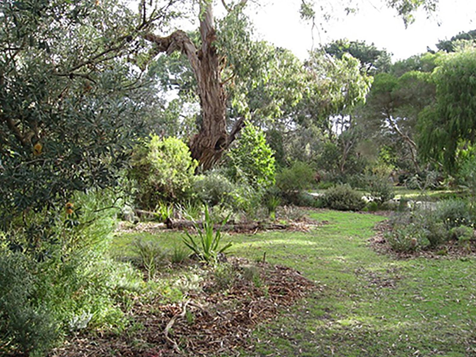 Native foilage and grasses at Illabunda