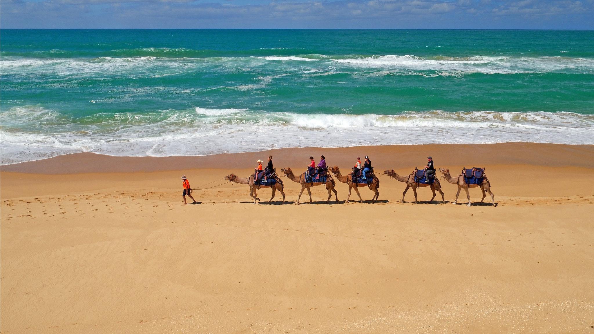 Lakes Entrance Camel Rides