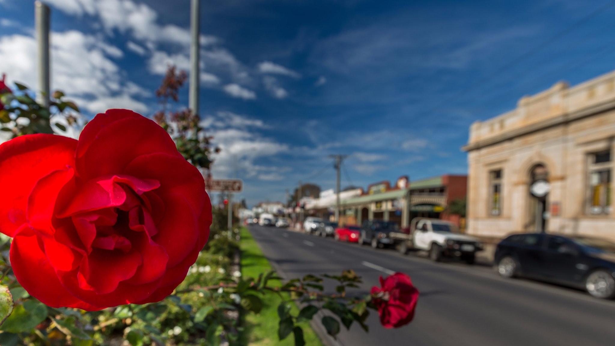 Rosedale Market