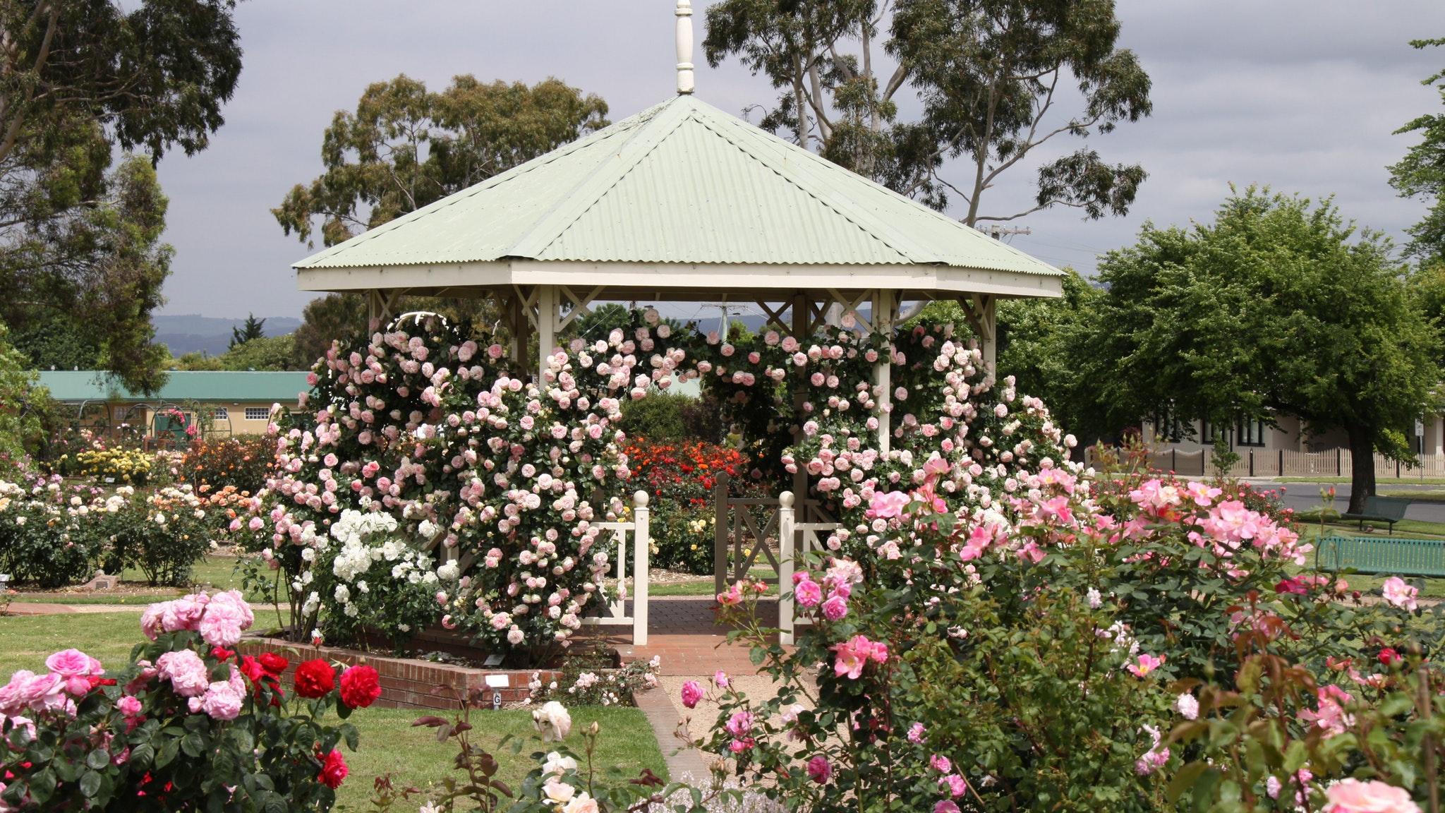 Morwell Centenary Rose Garden, Attraction, Gippsland, Victoria ...