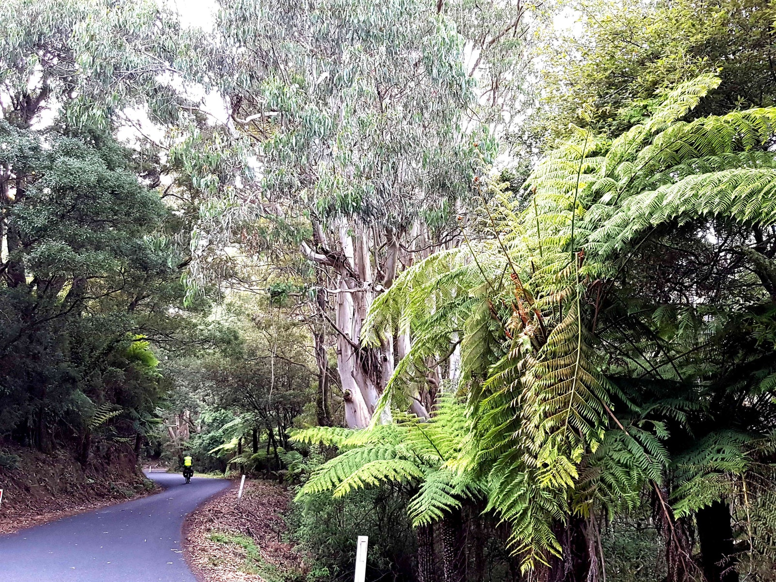 This wonderful road is hidden in eth southern Strzelcki ranges and takes you on a wonderful journey