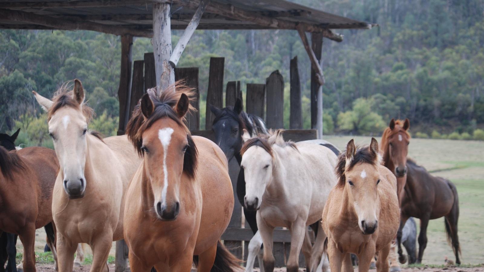 future riding trek horses