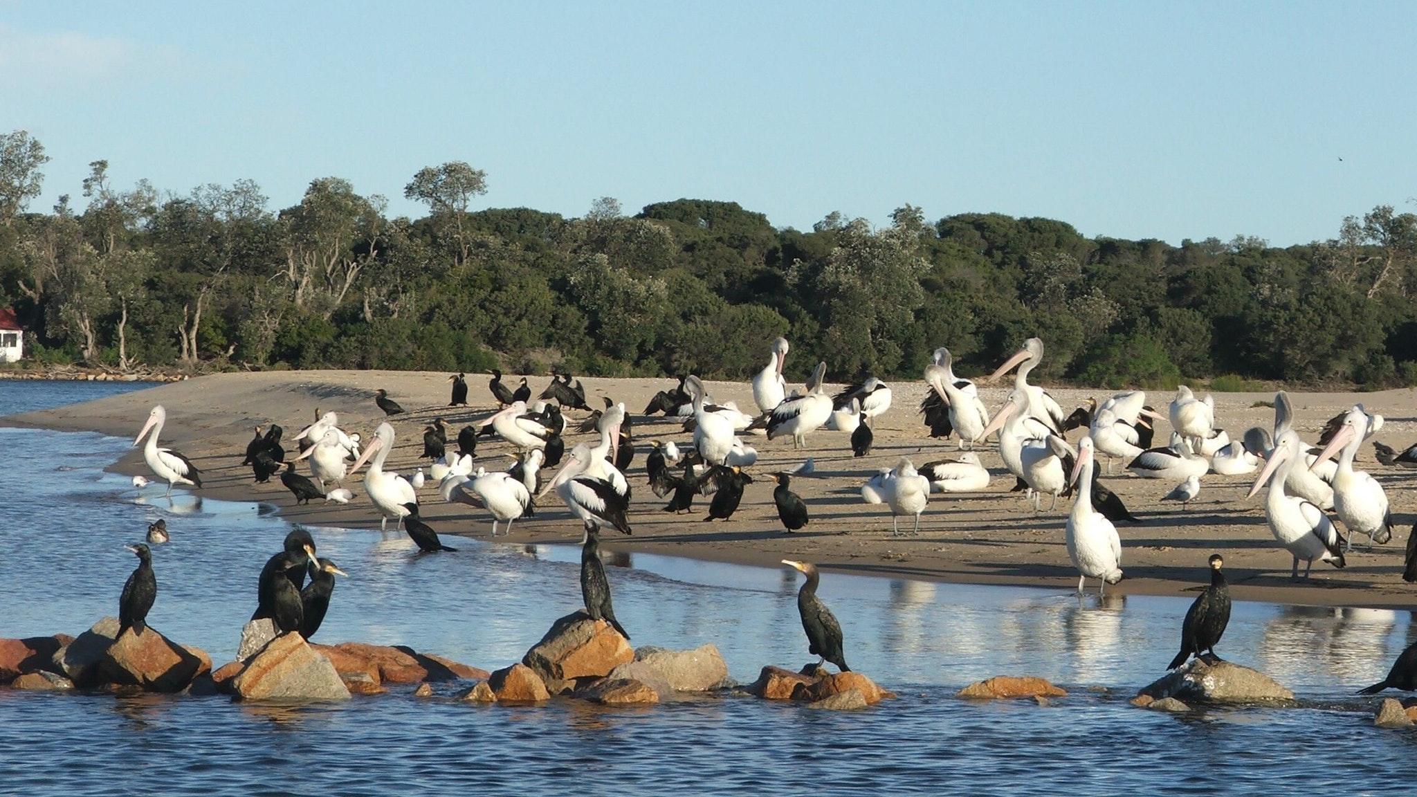 Sea-Birds on Rigby island