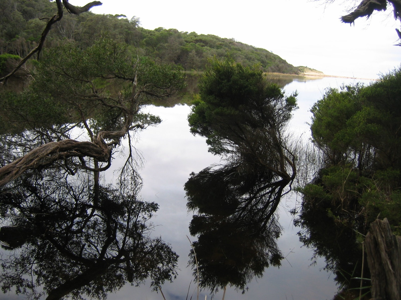 Refections in water near Point Hicks, Croajingolong