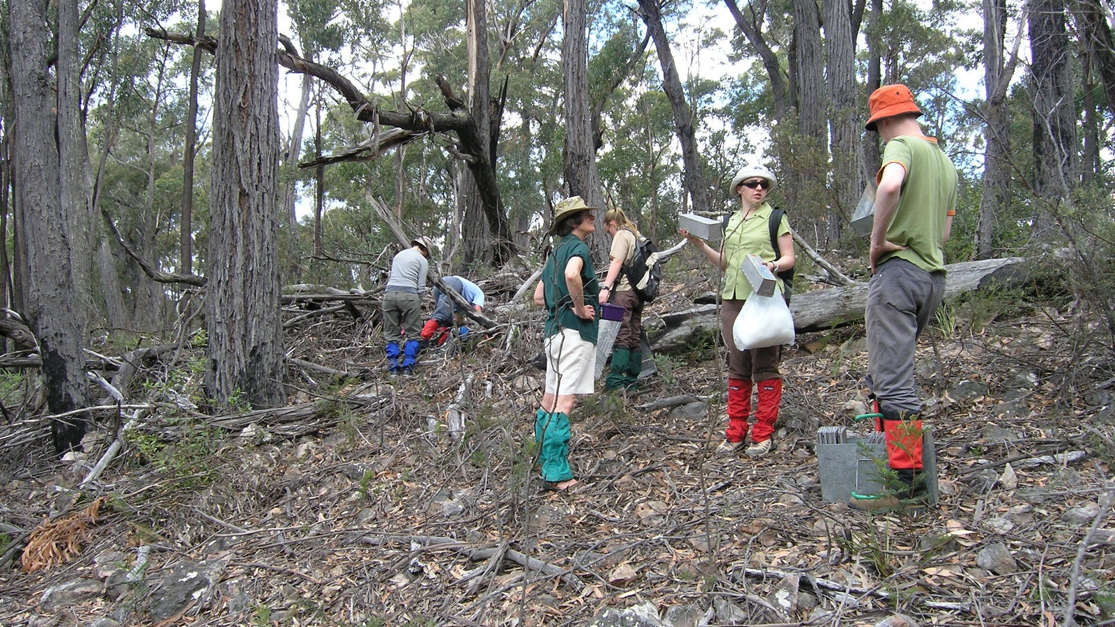 Setting out small mammal traps on a wildlife survey with Gippsland High Country Tours