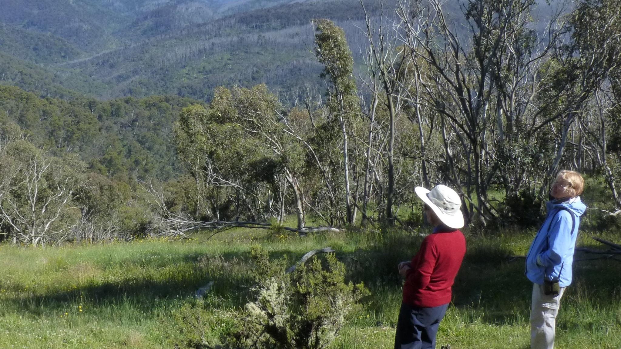 Enjoy mountain views on easy guided walks