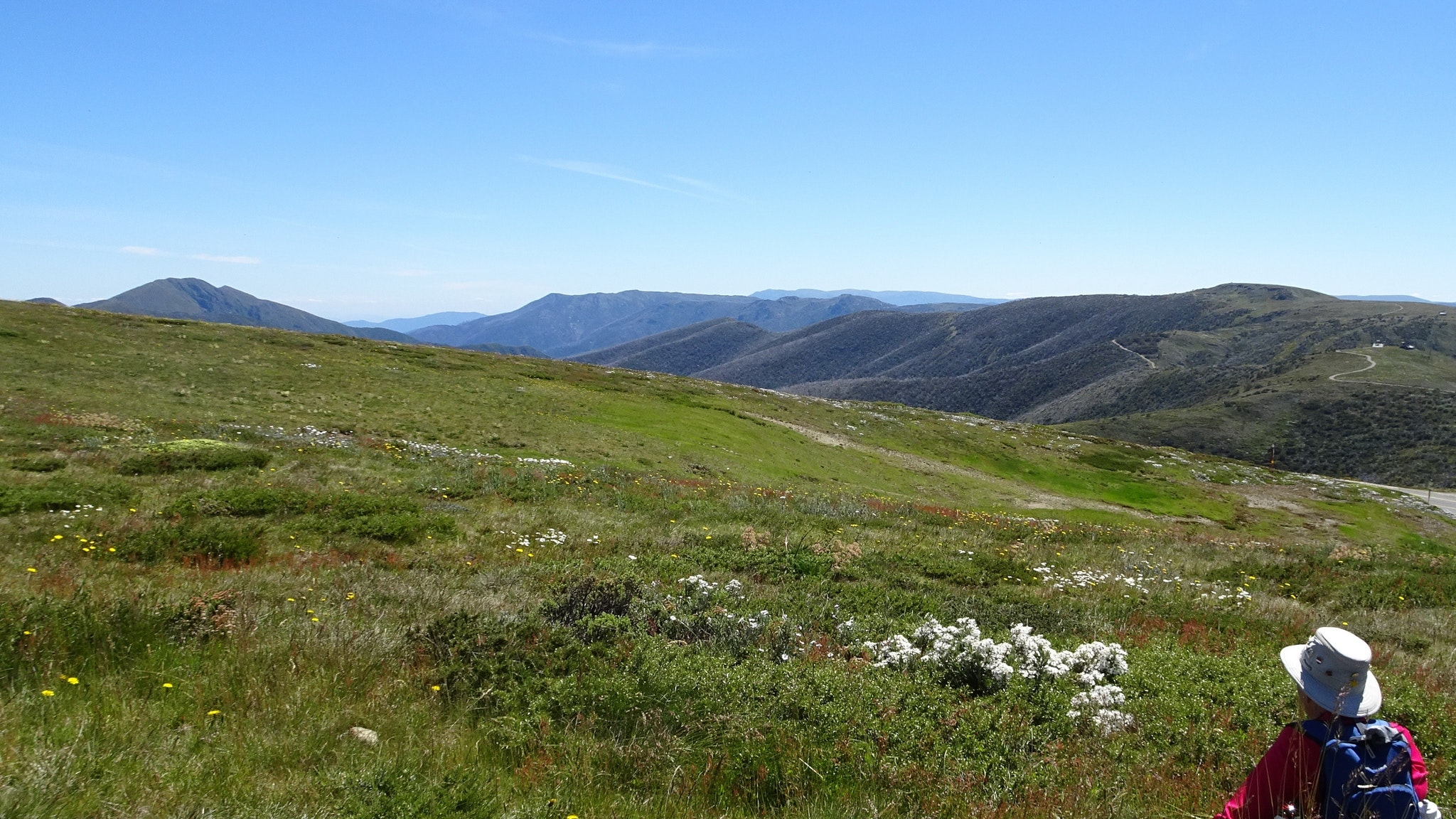 Enjoying mountain views and wildlflowers on an easy guided walk in the Alpine National Park