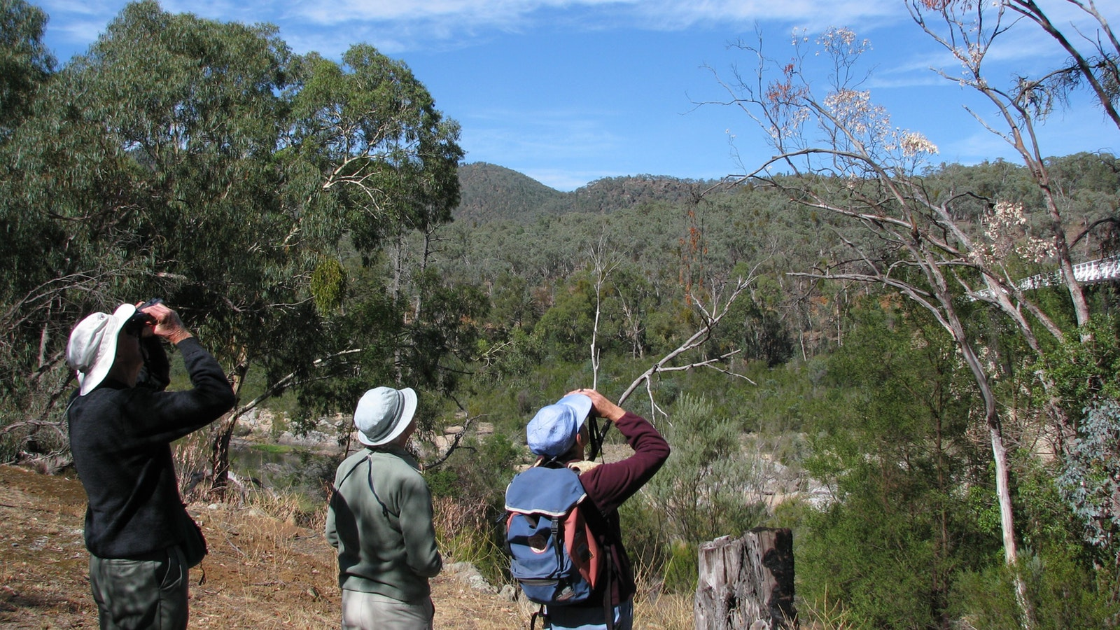Birdwatching in Snowy River National Park