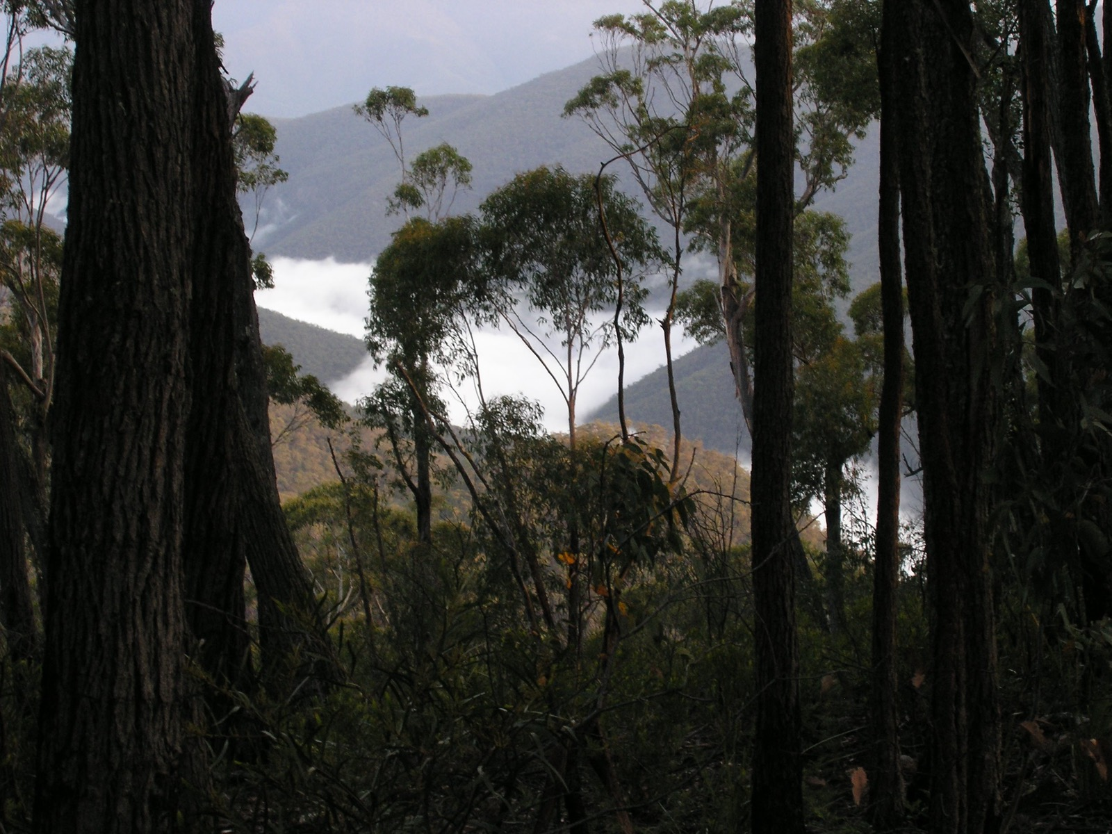 Fog over the Snowy River Valley