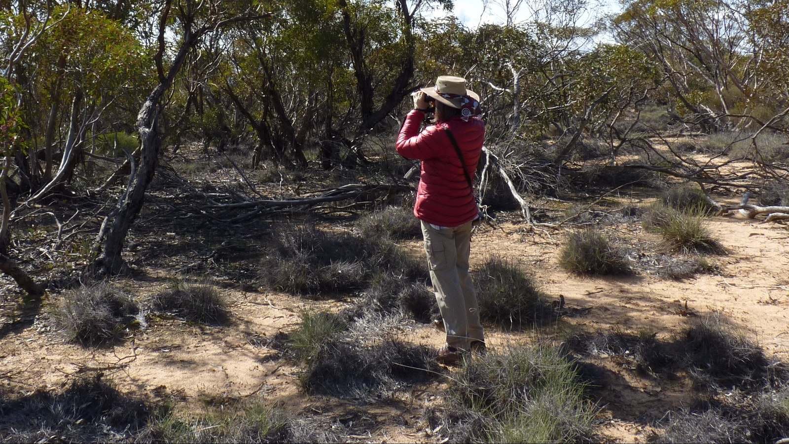 A lady birdwatching in mallee woodland of Murray Sunset National Park