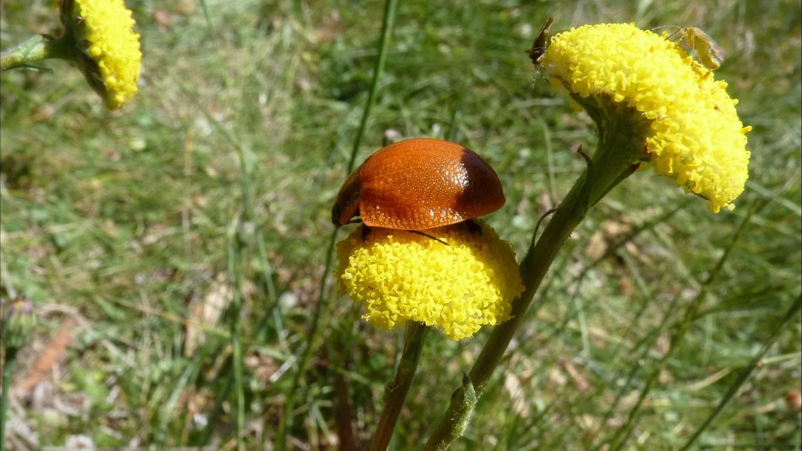 Nature up close on an alpine ecotour