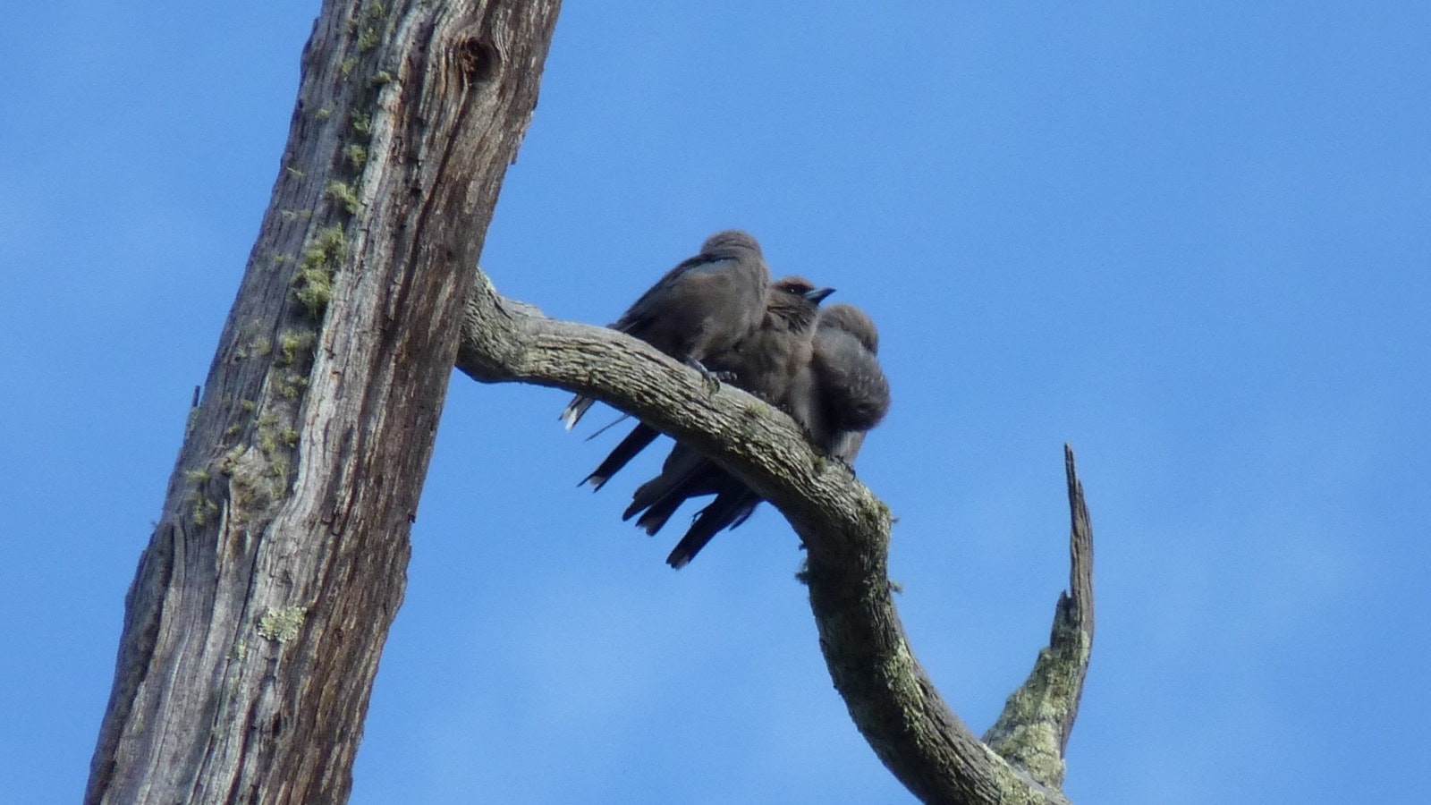 Watch birds liek these young Woodswallows going about their daily business.