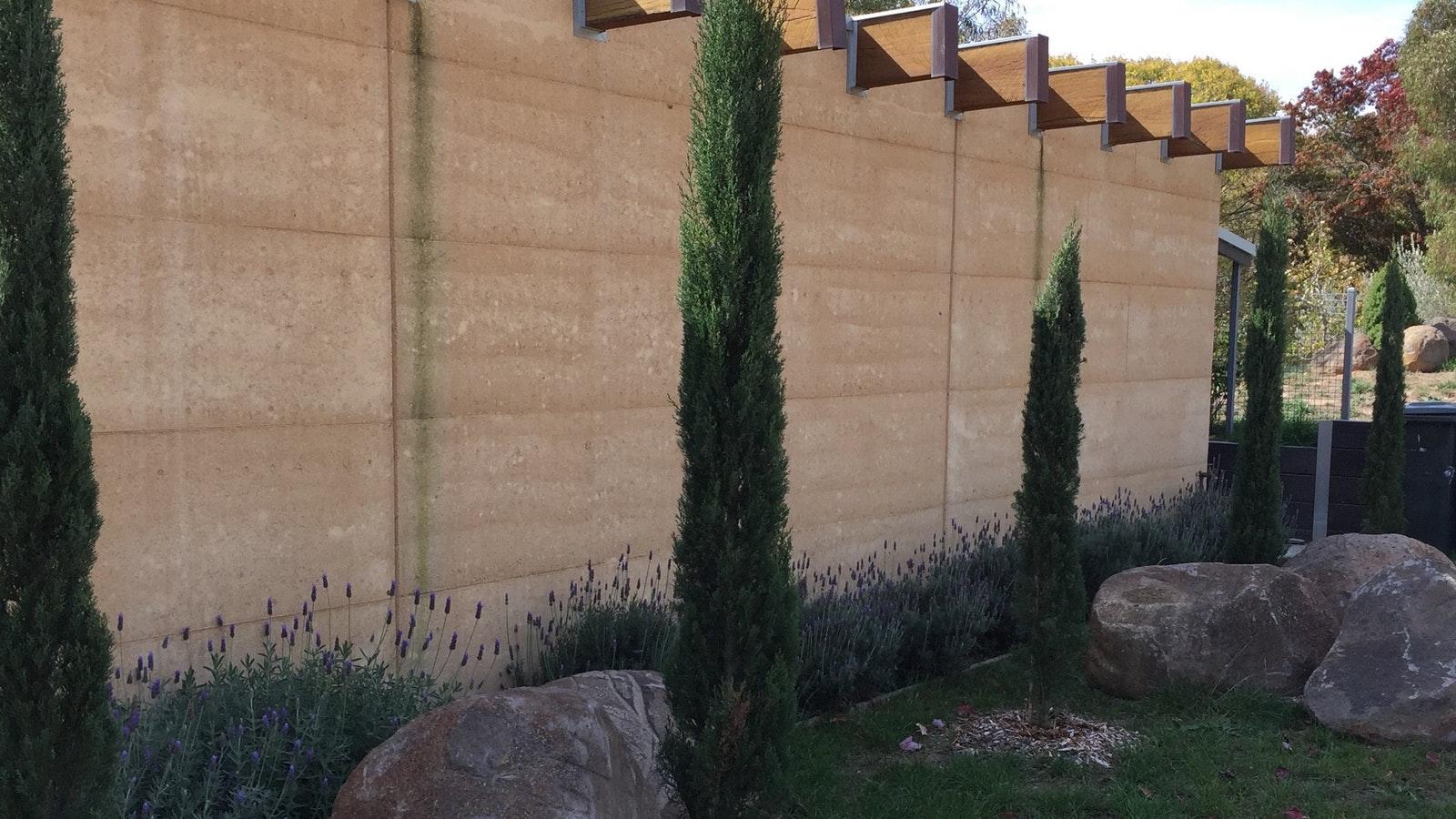 pencil pines
