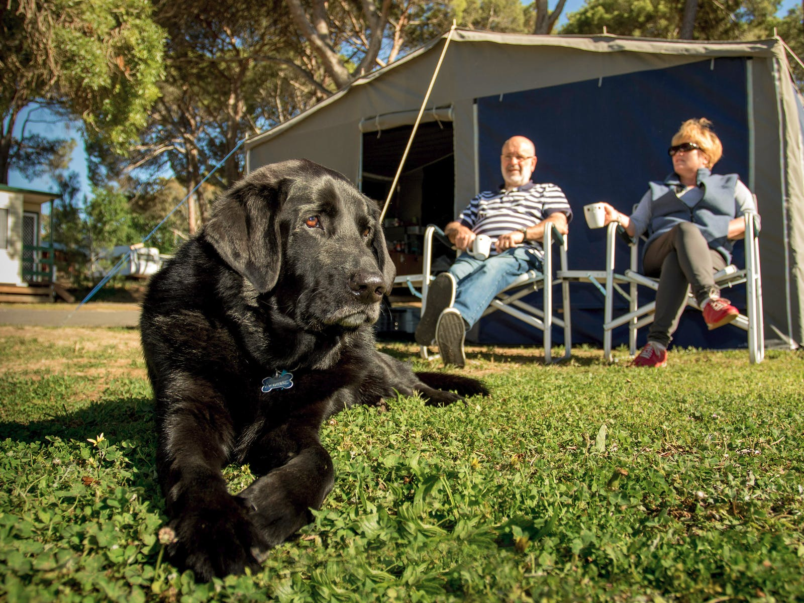 Black labradour dog with his family staying at BIG4 Castlemaine Gardens Holiday Park