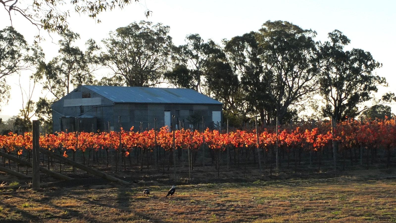 Mackereth's Hedon Farm