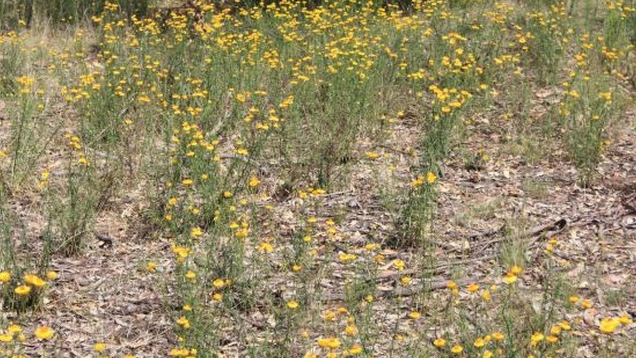 Rushworth Wildflower Hunt
