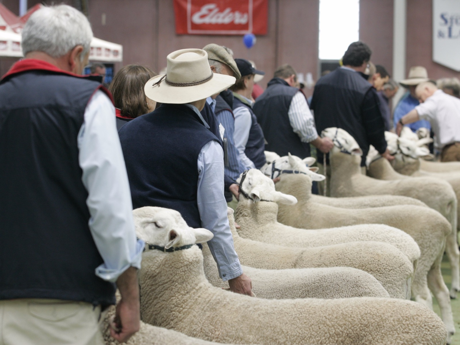 Australian Sheep and Wool Show