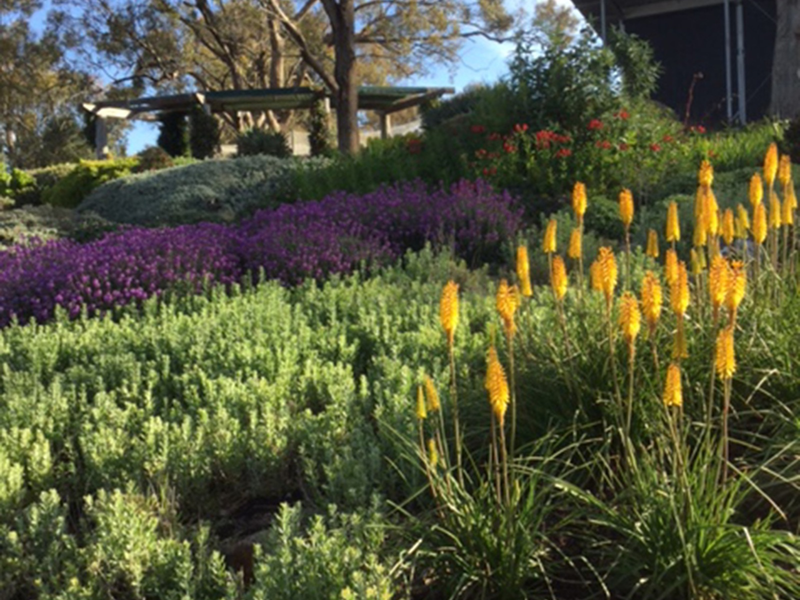 "alt=""yellow, green and purple massed plantings in a country garden"""