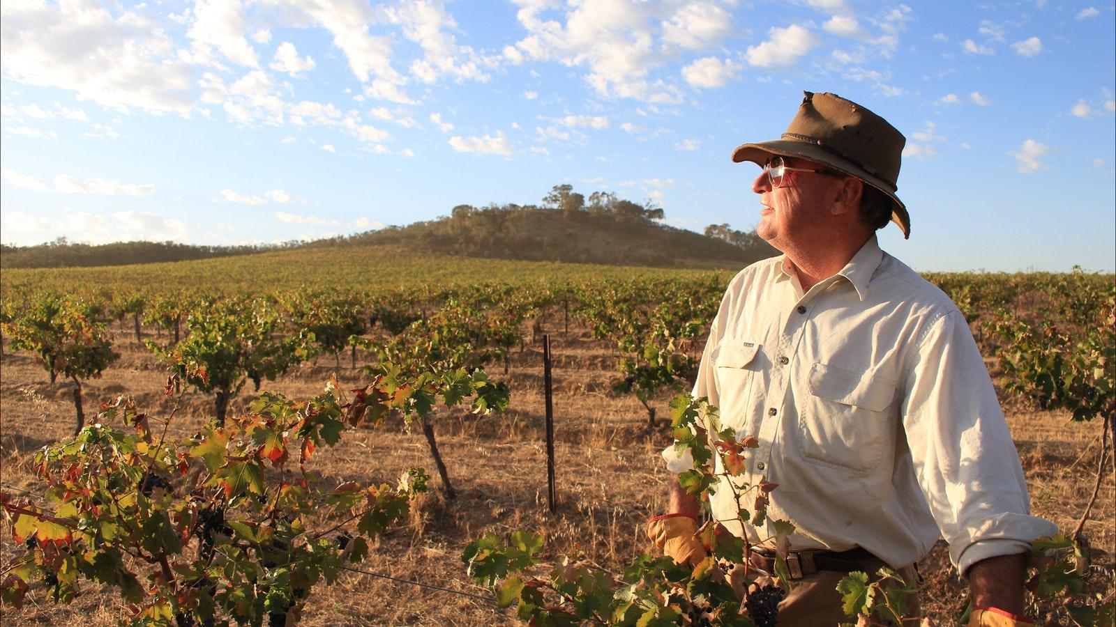 Vines at Redbank Winery